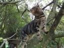 BIEN-ETRE ANIMAL La stérilisation des chats : agir ensemble pour le bien-être de tous